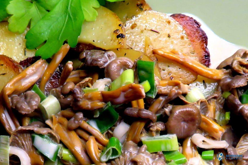 Pfifferlingspfanne mit Bratkartoffeln auf Teller angerichtet