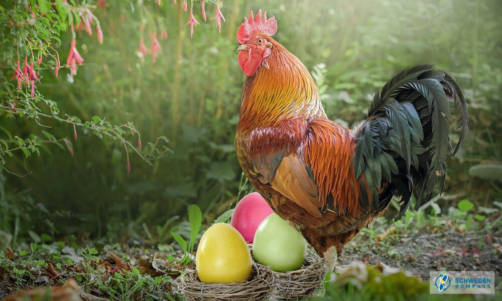 Osterhahn neben Eiern